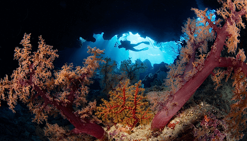 soft_corals